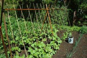 Green Beans: Beans Trellis, Gardens Ideas, Growing Up, Gardens Trellis, Vegetables Gardens, Spaces Save, Growing Beans, Veggies Gardens, Gardens Plants