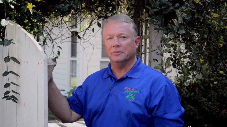 See Termites Swarming & learn inexpensive ways to keep them out of your ...