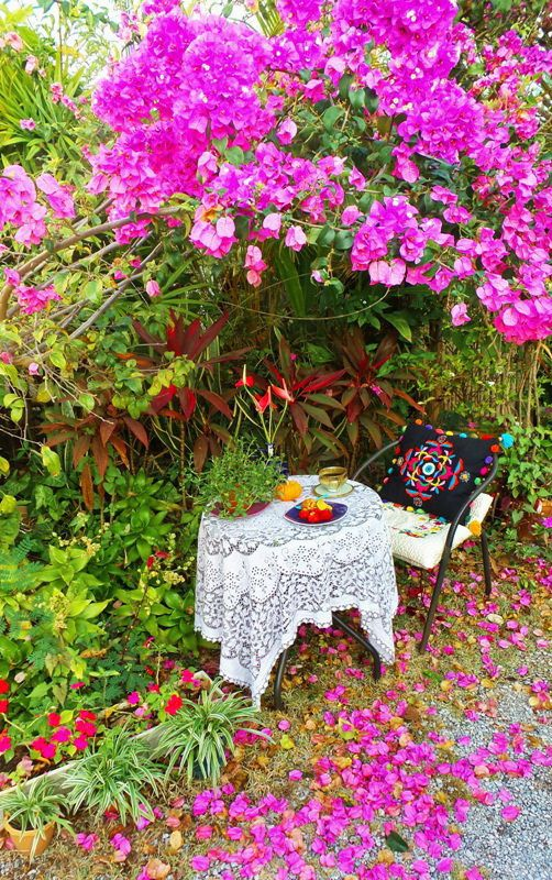 https://flic.kr/p/EuU3VK | Morning coffee under my Bougainvillea tree