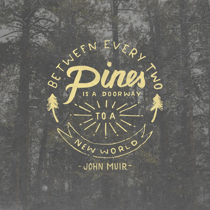 Between every two pines is a doorway to a new world - John Muir