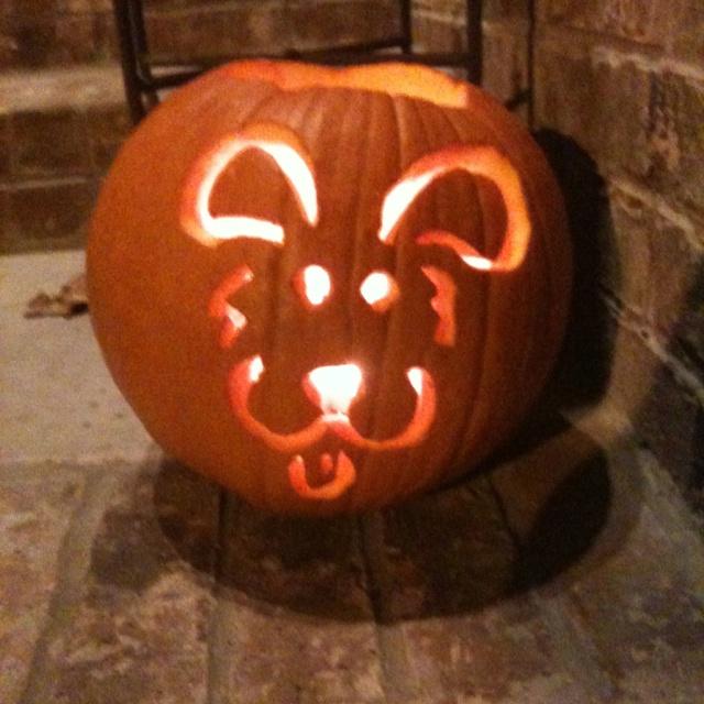 Puppy Dog Pumpkin Jack O Lantern Fall Fun Pinterest
