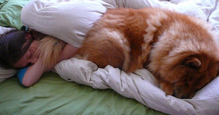 ¿Qué clase de tela repele mejor el pelo de perro?. De pelo largo o corto, las mascotas pueden dejar importantes cantidades de su pelo en la ropa y los muebles. Algunos tipos de tela son mejores repeliendo pelo de perro que otros. Nanotex y Crypton son dos de esas telas.