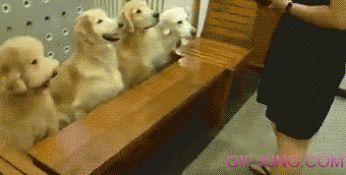 Dogs pray before eating amazing animals pinterest