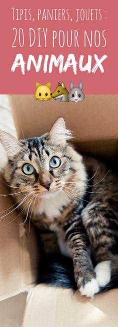 Tipis, paniers, jouets : 20 DIY pour nos animaux !