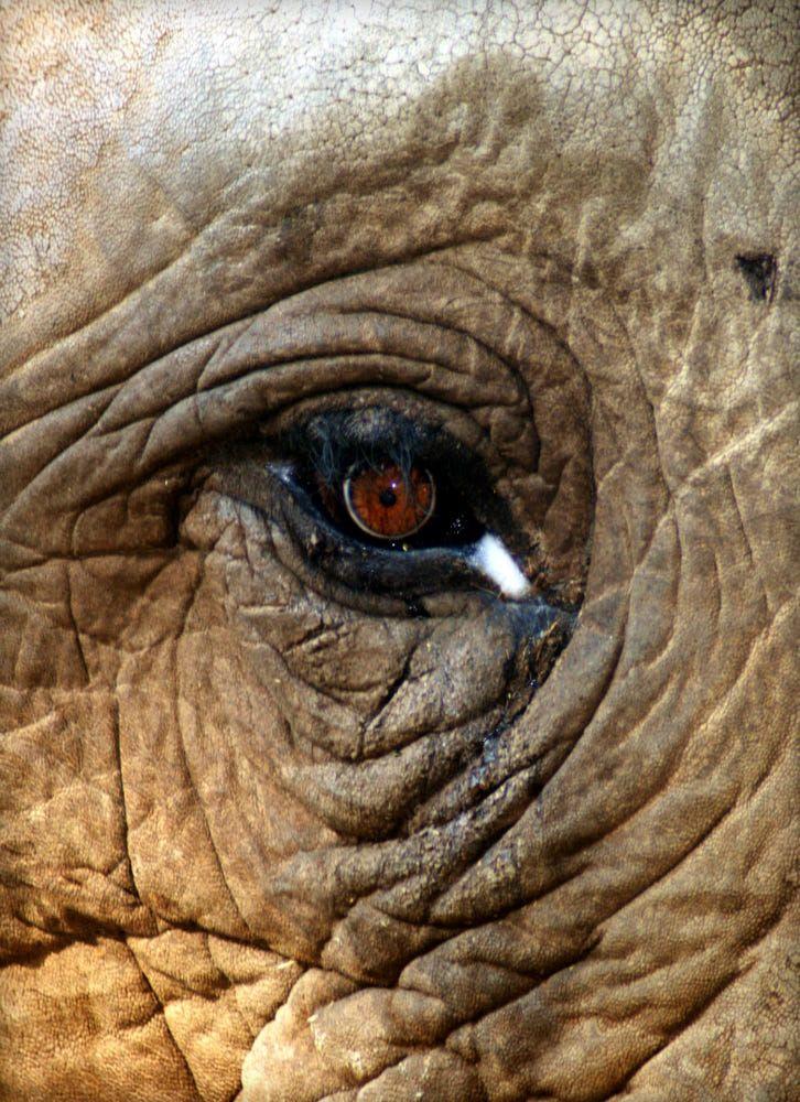 THE ELEPHANT'S TEARS by Tosca D'Andrea on 500px