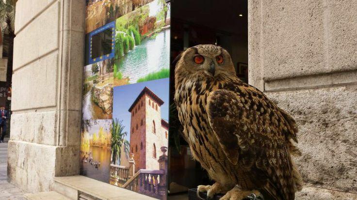 Exhibición de aves rapaces de Anna en la Oficina de turismo de la Diputación de Valencia