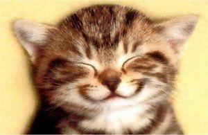 Lachende kat