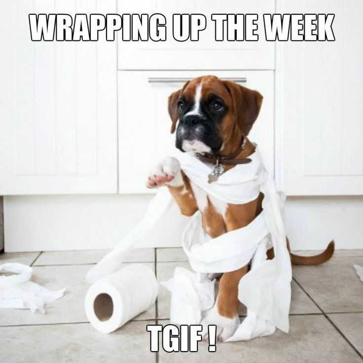 Funny Happy Friday Work   Happy Friday   Funny Fridays ~ re-pinned by boxerdogchecks.com boxer-themed stationery, gifts, and home decor.