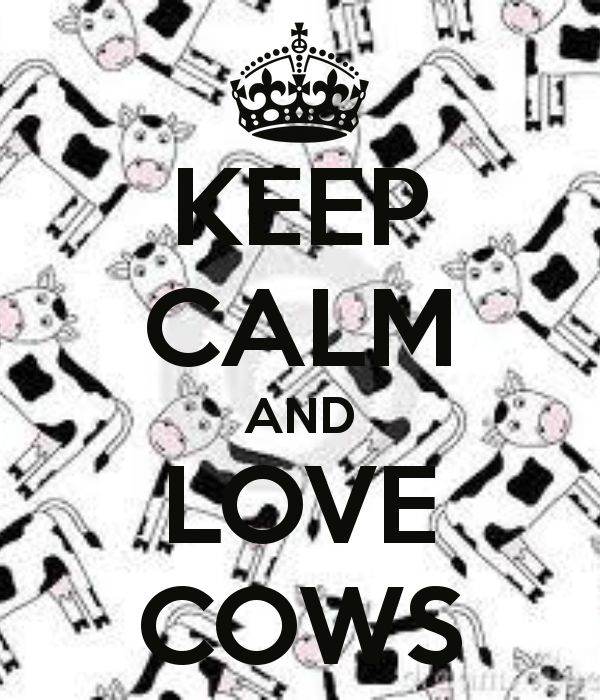 KEEP CALM AND LOVE COWS...i <3 this because one of the first little presents austin got me was a little stuffed cow because of a joke from high school and then i got him one, and both our babies have a little stuffed cow, it's kind of become our thing :)