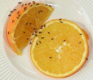 Last van fruitvliegjes in huis? Bestrijd ze met de tips op: http://www.ikzoekeenschoonmaakster.nl/blog/fruitvliegjes/