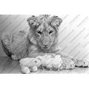 008: Lion Prints, Prints Stores, Call Christian, Lion Call