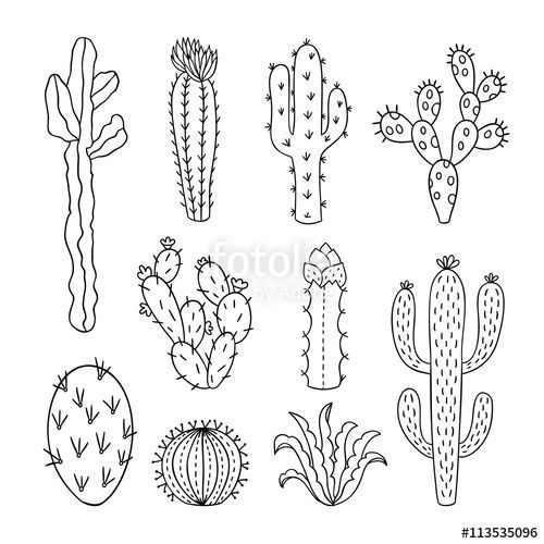 image result for cactus line drawing