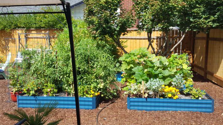 44415dad0e952602b6b4b3aa8a6301b4 - Gardener's Supply Company Large Cucumber Trellis