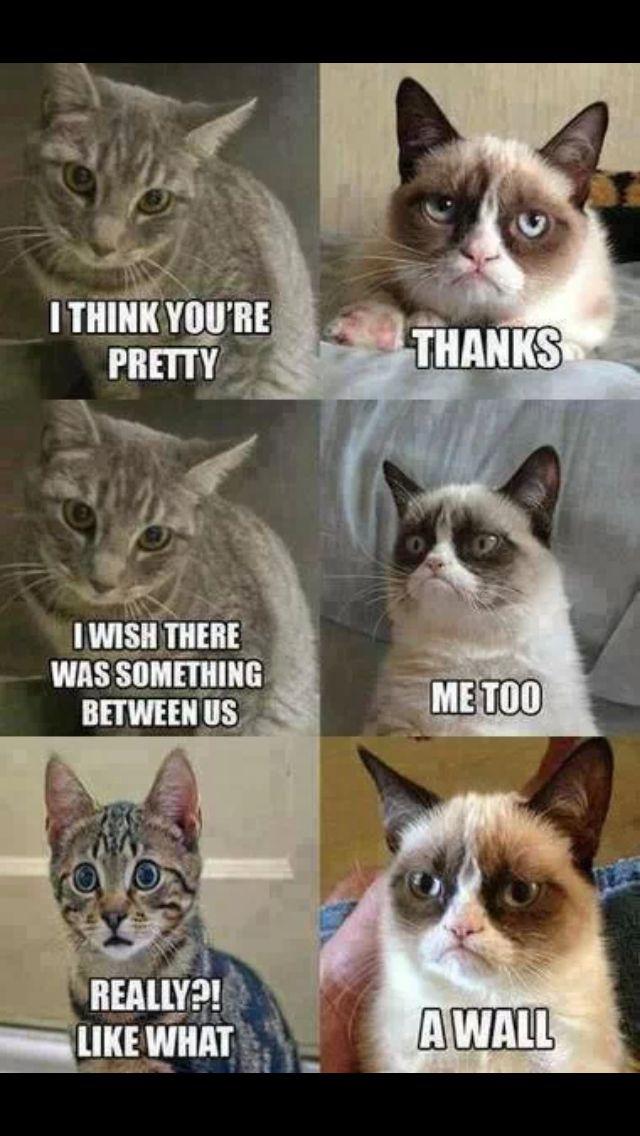 Grumpy cat Is Funnylarious.LOL