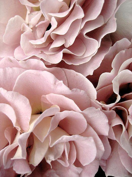 pink.quenalbertini: I'm blushing | Lili Claspe