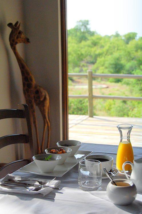 Mbizi Bush Lodge, Greater Kruger National Park, Safari   gallery