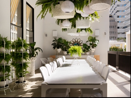 white and plants.  Hanging plants
