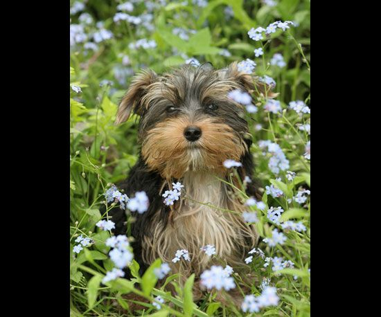 Pictures of Cute Dogs With Flowers | POPSUGAR Pets