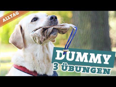 Hund Dummy | Hundebeschäftigung draußen | Dummytraining Labrador Hundekanal - YouTube