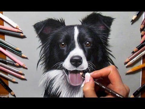 Colored Pencil Drawing: Border Collie - Speed Draw   Jasmina Susak - YouTube