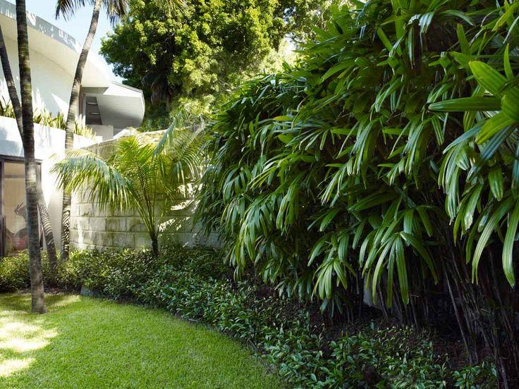 Best 25 Trachelospermum Jasminoides Ideas On Pinterest