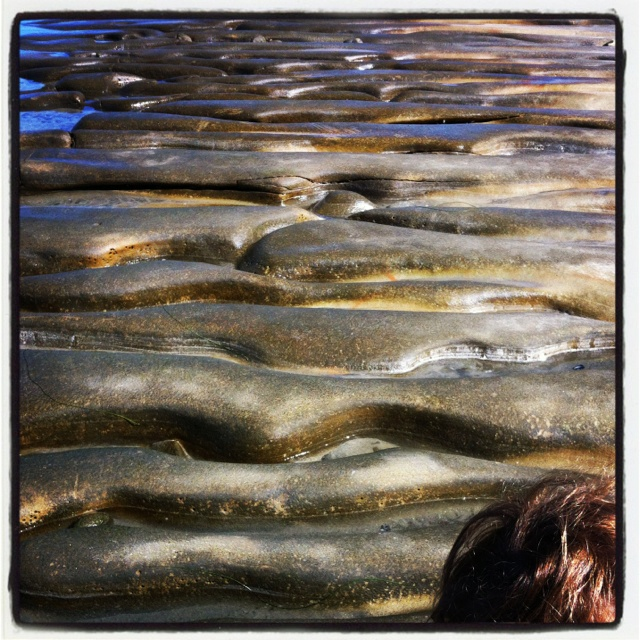 Tidal Pools At Low Tide Organic Shapes Inspiration
