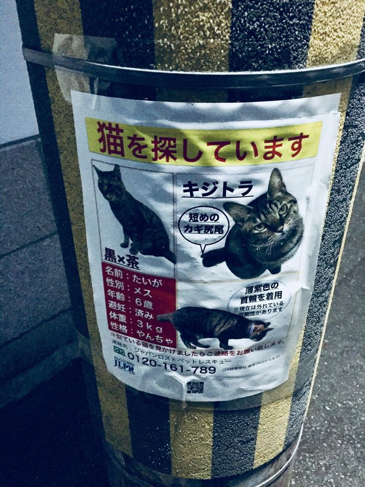 Really well designed lost cat poster in Japan.