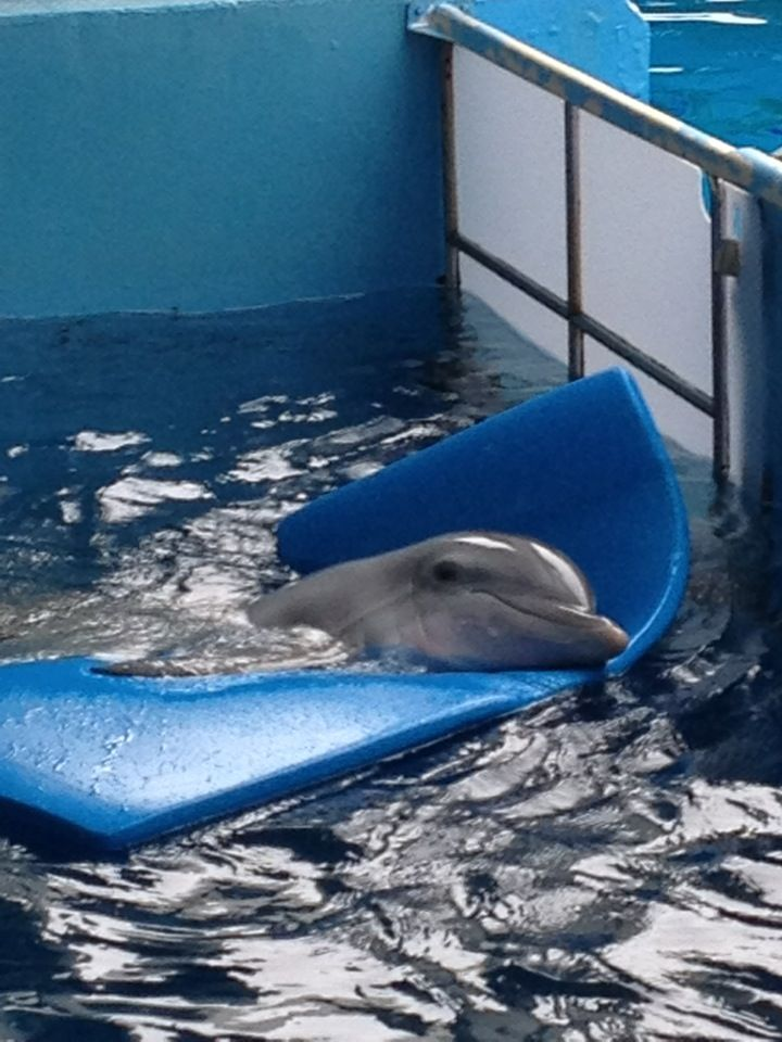 Clearwater Marine Aquarium itt: Clearwater, FL