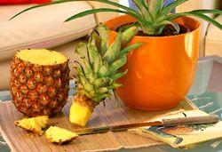 Plant Ananas my stoner neighbor was just telling me how u can totally plant pineapples!