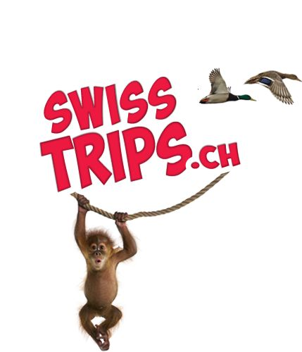 Trips overview | Swiss Trips coop special offers