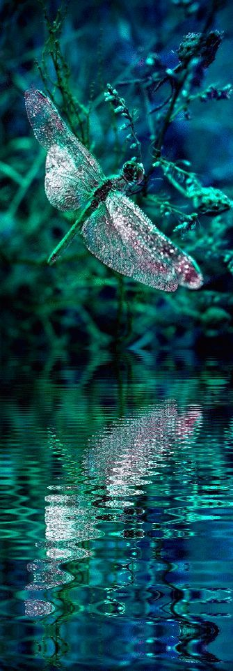 "18. Spectrum:  ""This emerald green #dragonfly #reflection picture is amazing- love to paint it as much as we would, I would we would get the fine detail but still, a #stunning capture! www.ArtNouv.com"""
