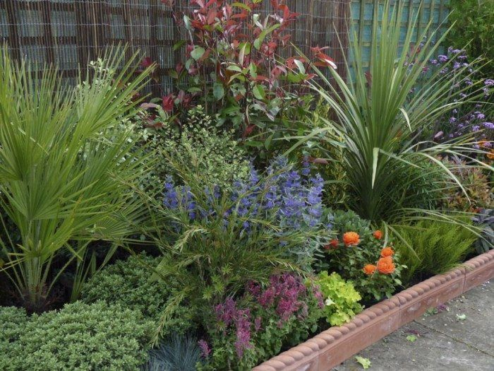 Garden With Border And Low Maintenance Plants