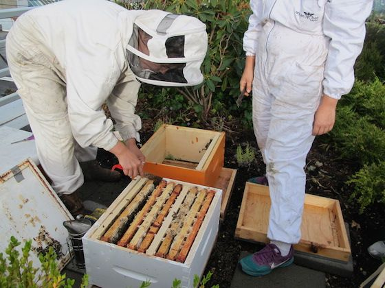 VPD bee hives w/Hives for Humanity