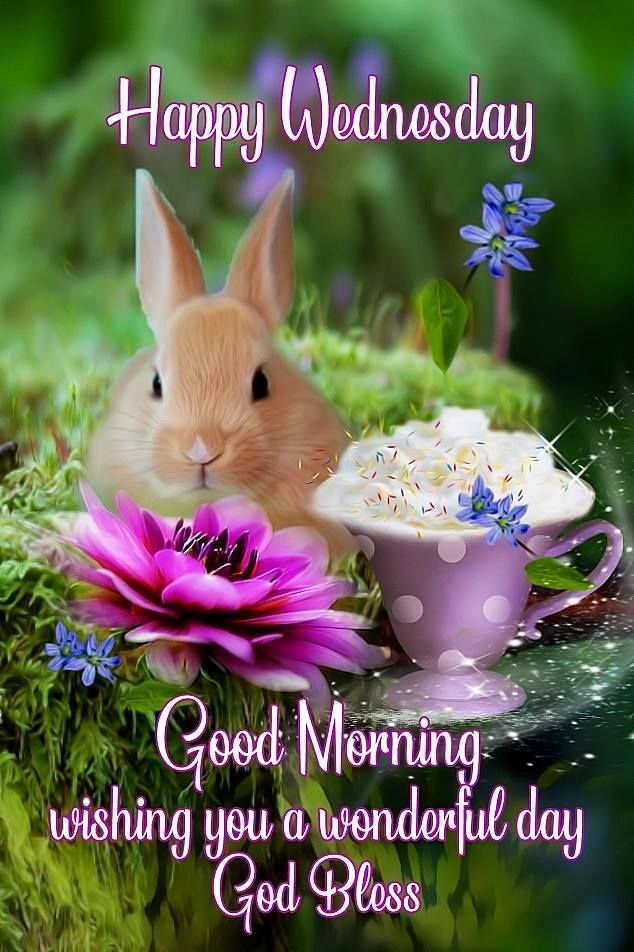 Happy Wednesday Good Morning Pictures, Photos, and Images for Facebook, Tumblr, Pinterest, and Twitter | Good morning wednesday, Wednesday morning greetings, Happy wednesday quotes