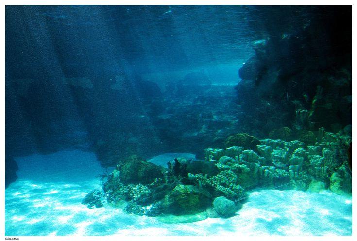 Seamless Underwater Texture Inspiration 511576 Pool Design