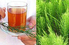 Egy tea amit a 40 év fölöttiek rendszeresen kellene fogyasszanak!