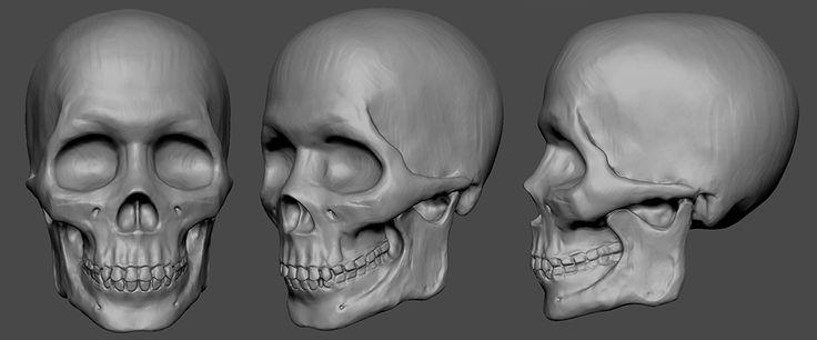 Anatomy study https://www.youtube.com/watch?v=KxJ0Tu_RjTg