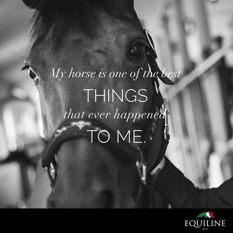 My horse is one of the best things that ever happened to me.  #equiline #horse #quote