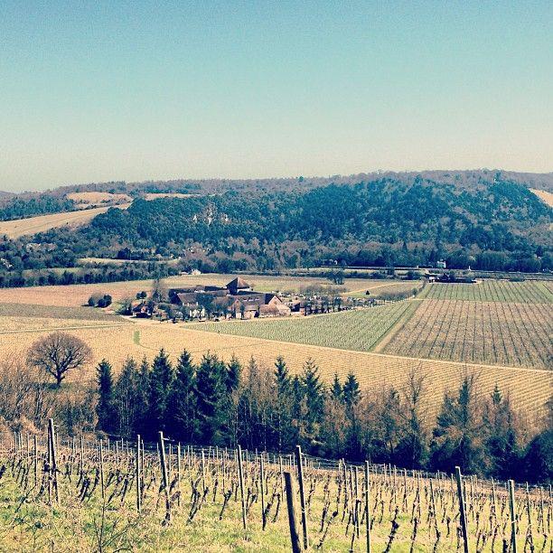 Denbies Wine Estate em Dorking, Surrey