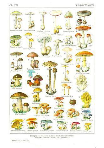 So Bio, So Local, So Positive | Reconnaître les champignons .