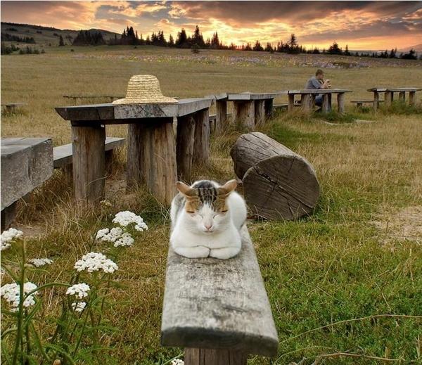 #cat: Wooden Benches, Cat, Company Picnics, Summer Picnics, Yoga Poses, Picnics Lunches, Kitty, Zen Master, Animal