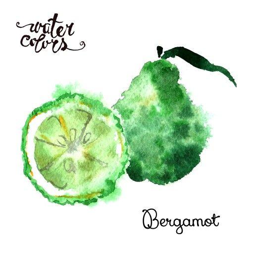 Watercolor bergamot