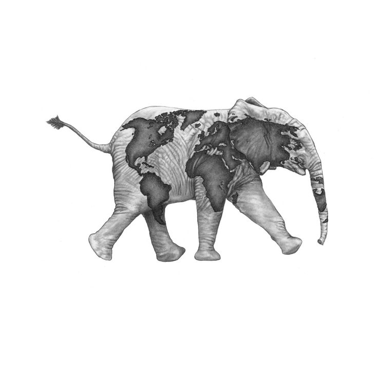 Elephant World Map Drawing by Artist John Gordon (2015, graphite pencil)