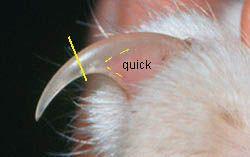 cat nails, cat claws, nail quick