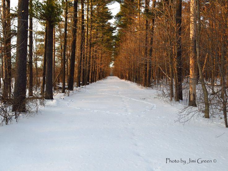 Winter trail..
