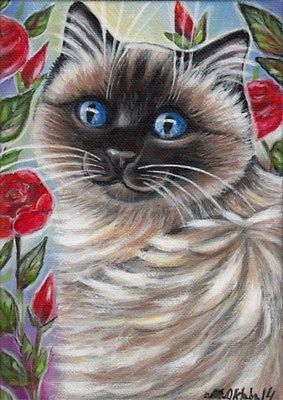 100 best Ragdoll images on Pinterest Cat stuff Cats and Animals