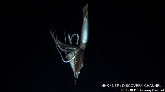 "A team in Japan has captured what is being called the ""first-ever"" footage of a giant squid in its natural habitat.     The giant squid video was recorded nine miles east of Chichi Island in the North Pacific Ocean by scientists from Japan's National Museum of Nature and Science, in cooperation with Japanese public broadcaster NHK and the Discovery Channel.  Amazing!!!"