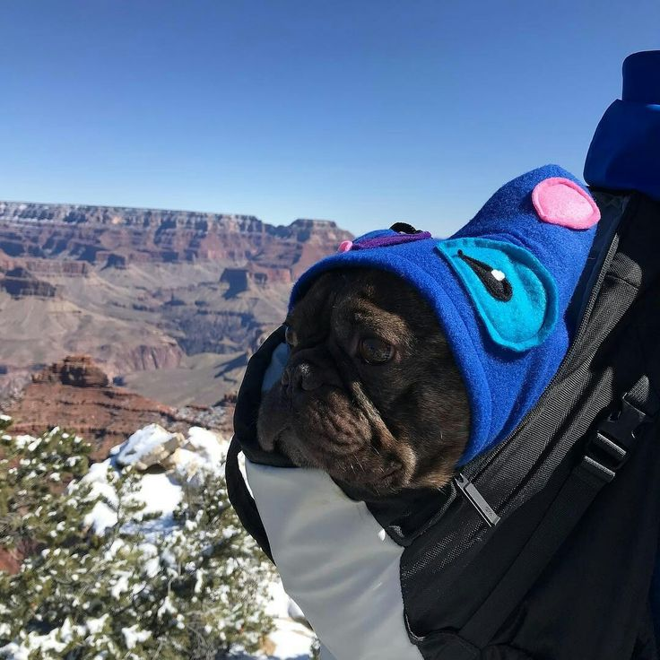 """""""I did not wish to go a hiking, & yet here I am!"""""""