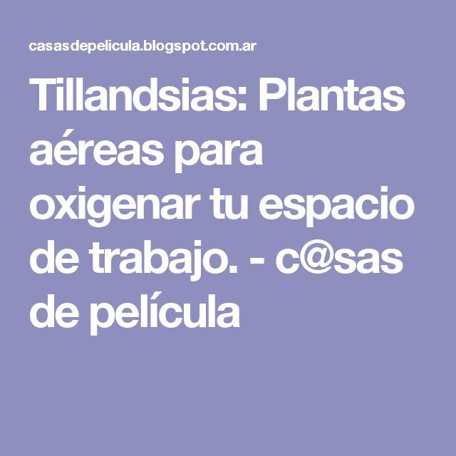 Tillandsias: Plantas aéreas para oxigenar tu espacio de trabajo. - c@sas de película