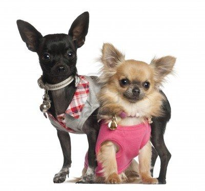 Tough Guys !!!! Yuppypup.co.uk provides the fashion conscious with stylish clothes for their dogs. Luxury dog clothes and latest season trends, Dog Carriers and Doggy Bling. Next Day Delivery. Please go to http://www.yuppypup.co.uk/ https://www.facebook.com/YuppyPup